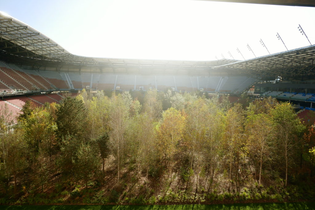 Wald im Stadion in Klagenfurt - For Forest